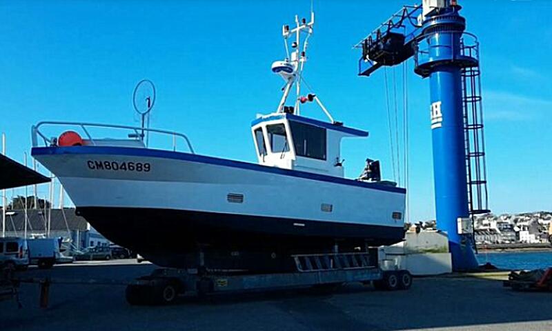 L albatros cm804689