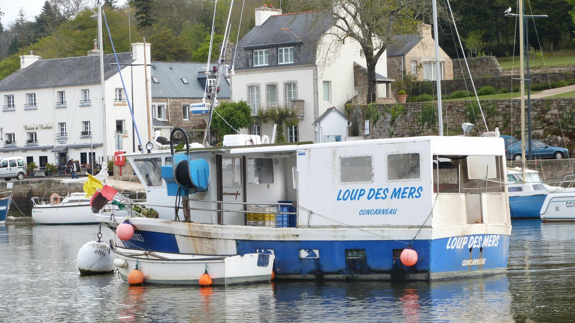Loup des mers cc fabrice roperch